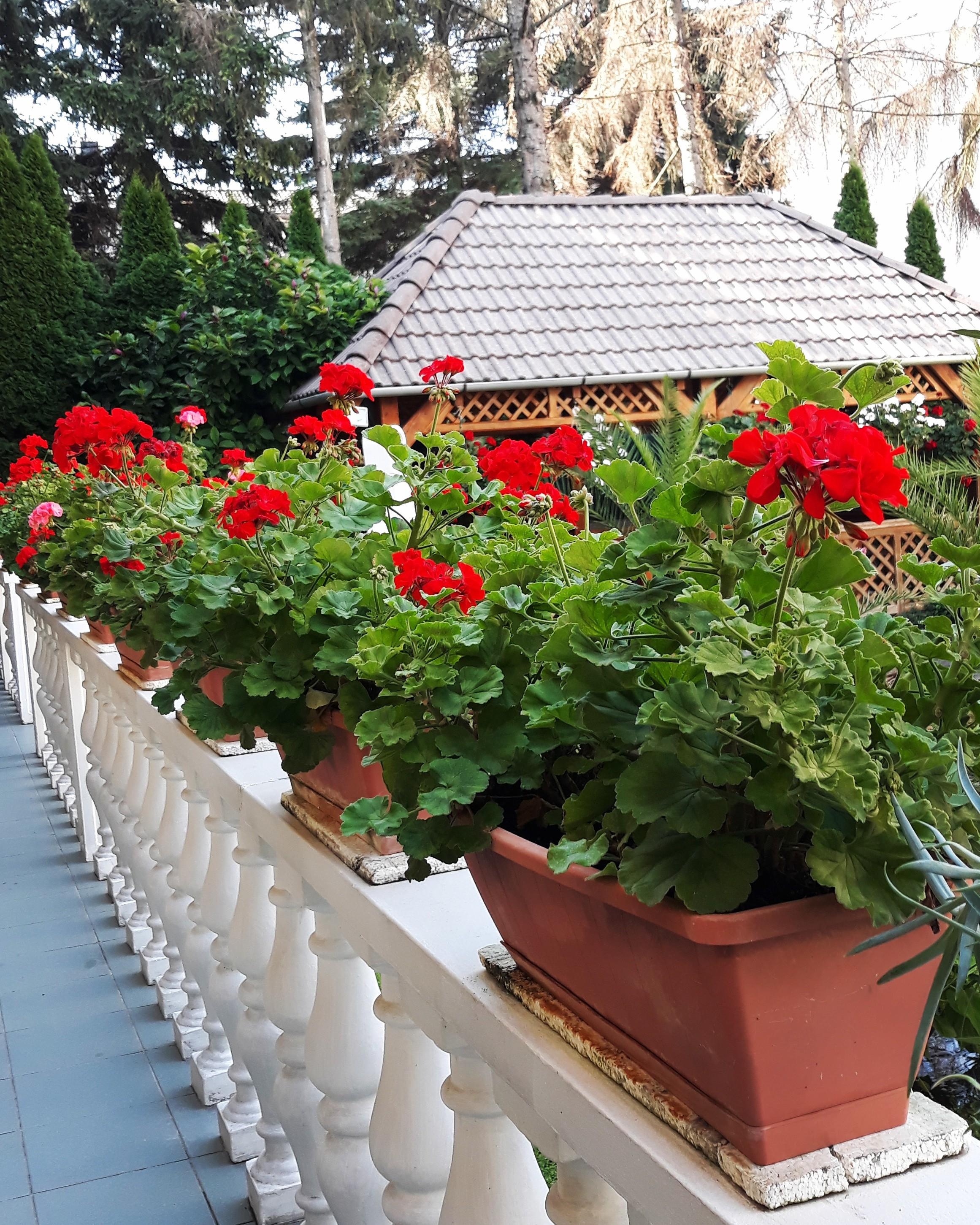 LÍDIA HOTEL*** WELLNESS ÉS ÉTTEREM - Unutarnje dvorište